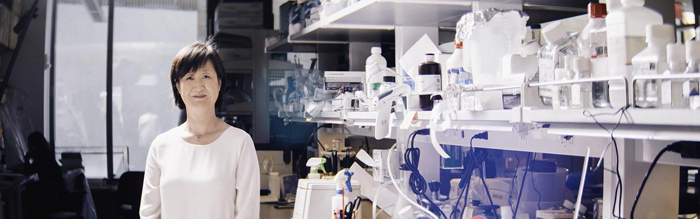 Qing Chen, M.D., Ph.D.